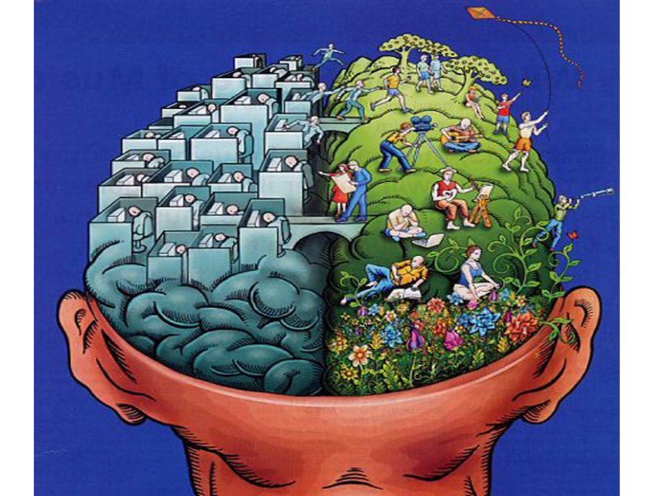 Sağ beyin sol beyin resmi koy.
