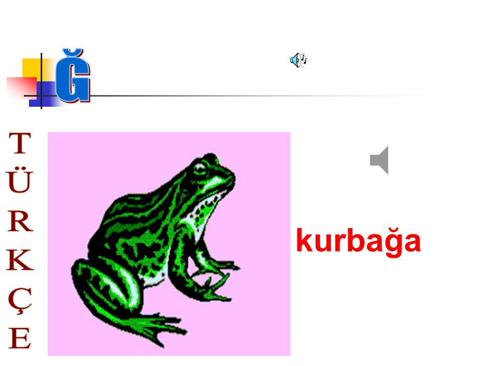 Ğ kurbağa TÜRKÇE