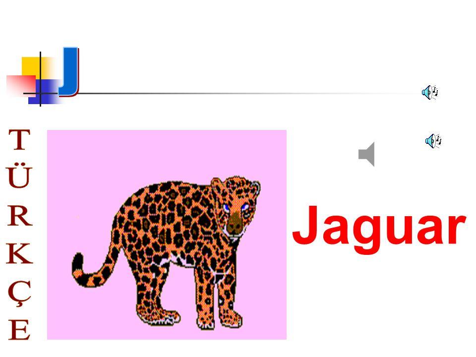 J Jaguar TÜRKÇE