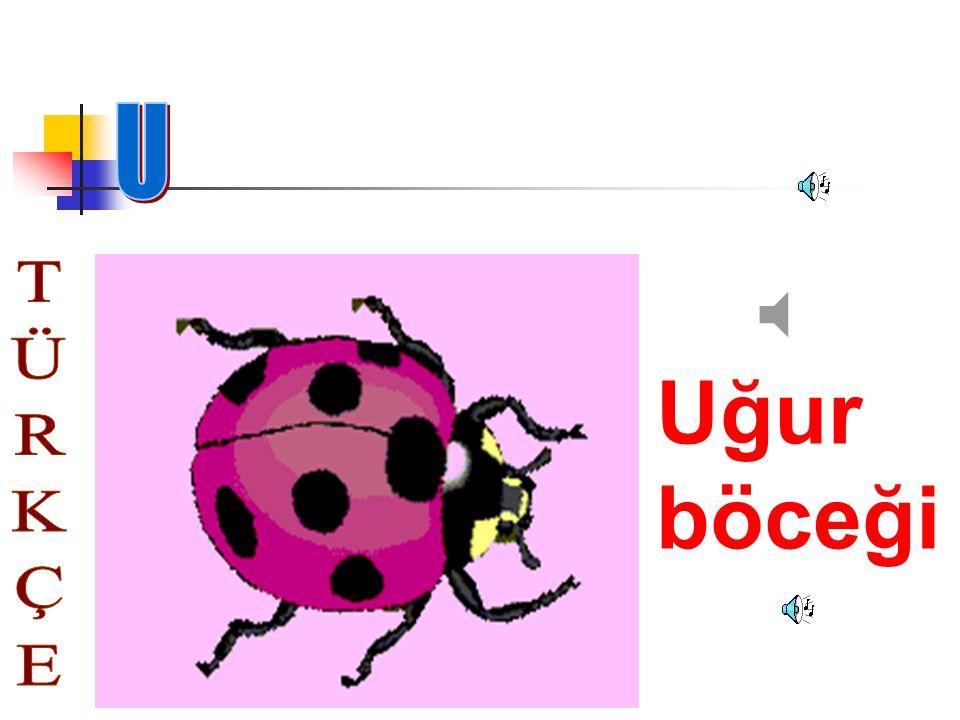 U Uğur böceği TÜRKÇE
