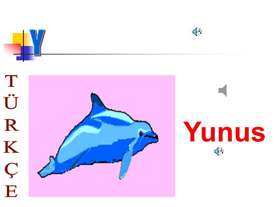 Y Yunus TÜRKÇE