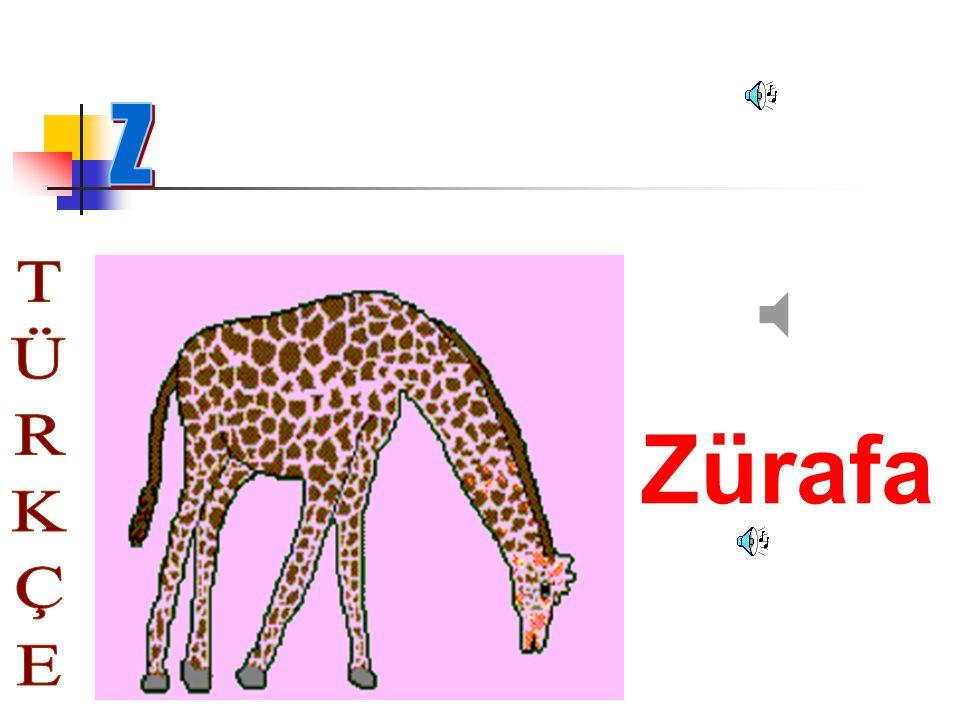 Z Zürafa TÜRKÇE