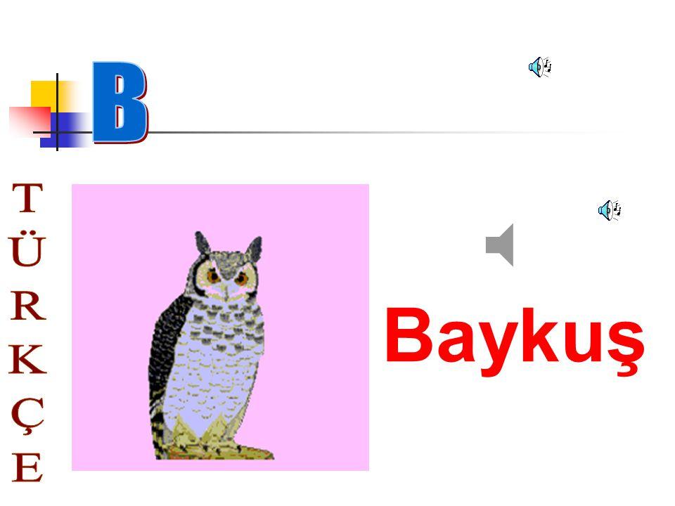B Baykuş TÜRKÇE