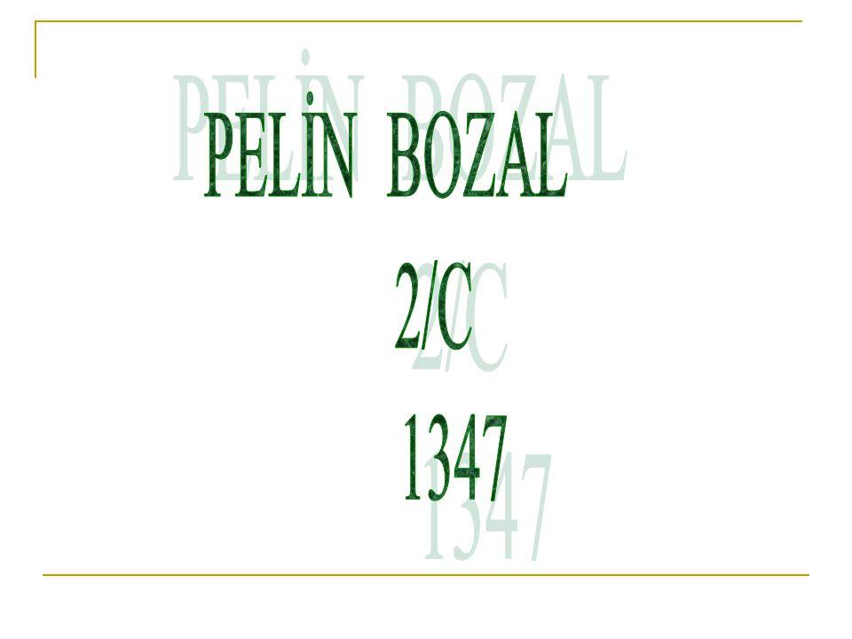 PELİN BOZAL 2/C 1347