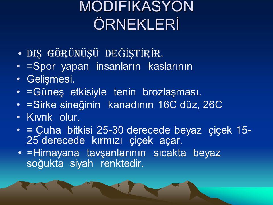 MODİFİKASYON ÖRNEKLERİ