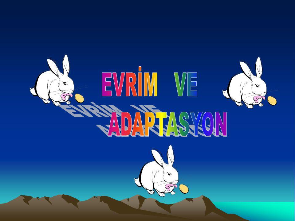 EVRİM VE ADAPTASYON