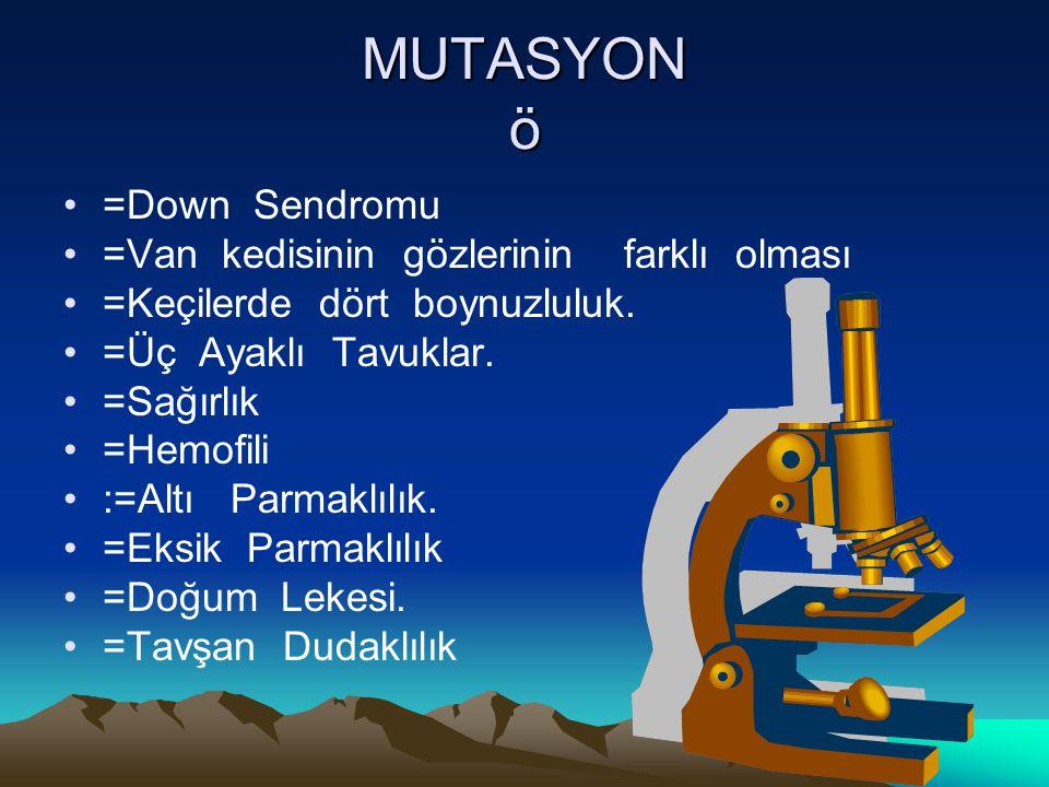 MUTASYON ö =Down Sendromu =Van kedisinin gözlerinin farklı olması