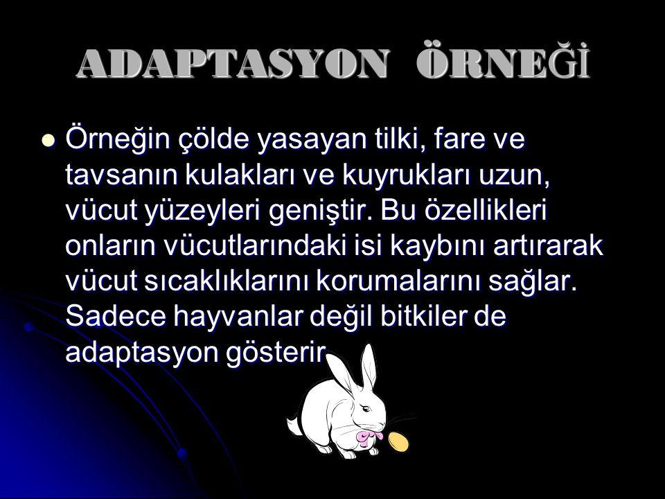 ADAPTASYON ÖRNEĞİ