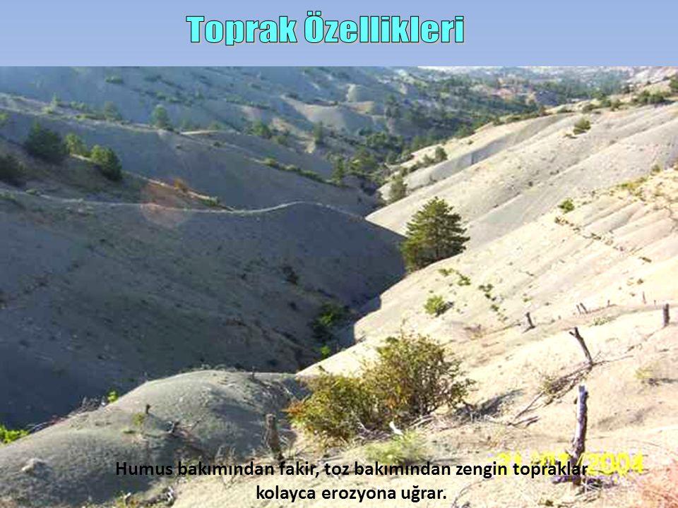 Toprak Özellikleri Humus bakımından fakir, toz bakımından zengin topraklar kolayca erozyona uğrar.