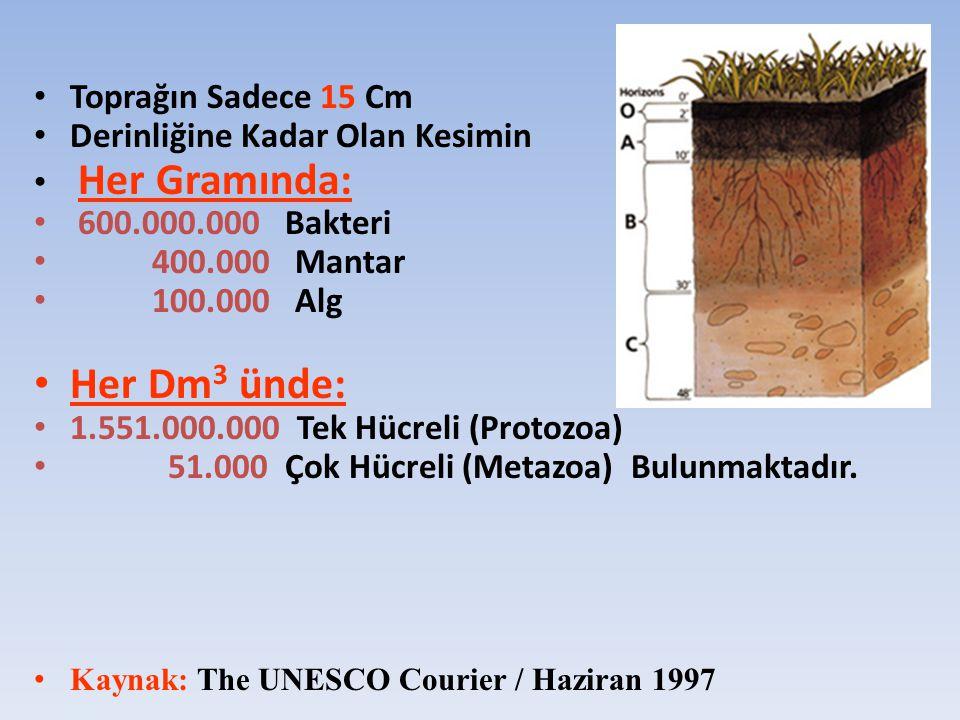 Her Dm3 ünde: Toprağın Sadece 15 Cm Derinliğine Kadar Olan Kesimin