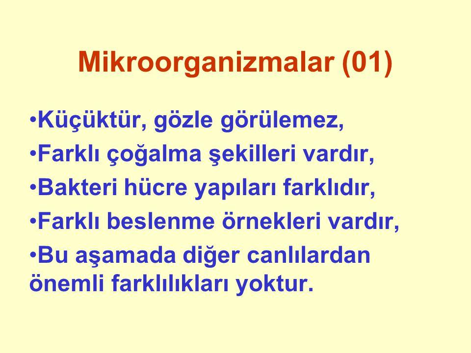 Mikroorganizmalar (01) Küçüktür, gözle görülemez,