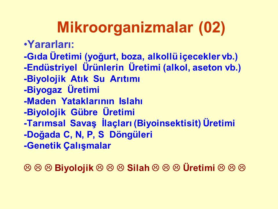 Mikroorganizmalar (02) Yararları: