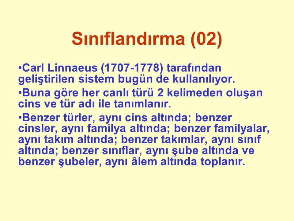 Sınıflandırma (02) Carl Linnaeus (1707-1778) tarafından geliştirilen sistem bugün de kullanılıyor.