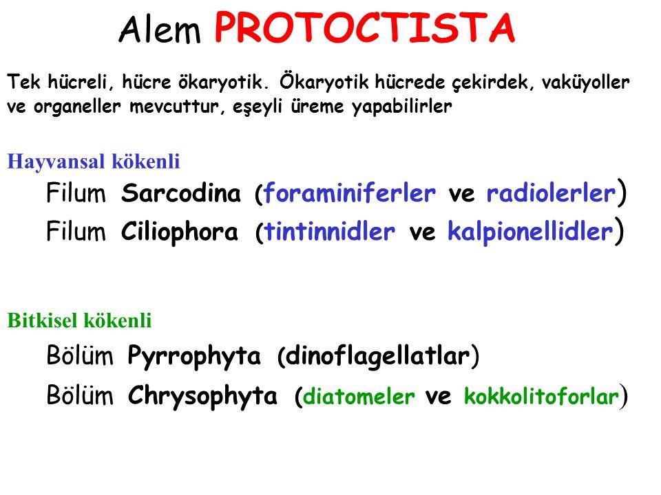 Alem PROTOCTISTA Filum Sarcodina (foraminiferler ve radiolerler)