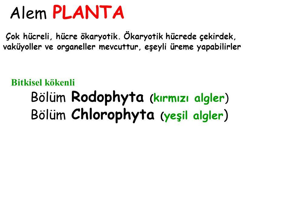 Bölüm Rodophyta (kırmızı algler) Bölüm Chlorophyta (yeşil algler)