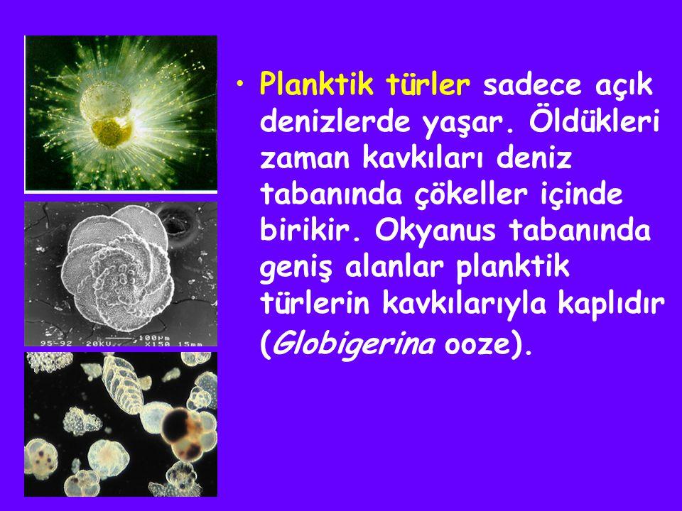 Planktik türler sadece açık denizlerde yaşar