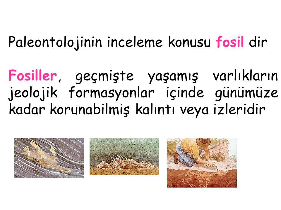 Paleontolojinin inceleme konusu fosil dir