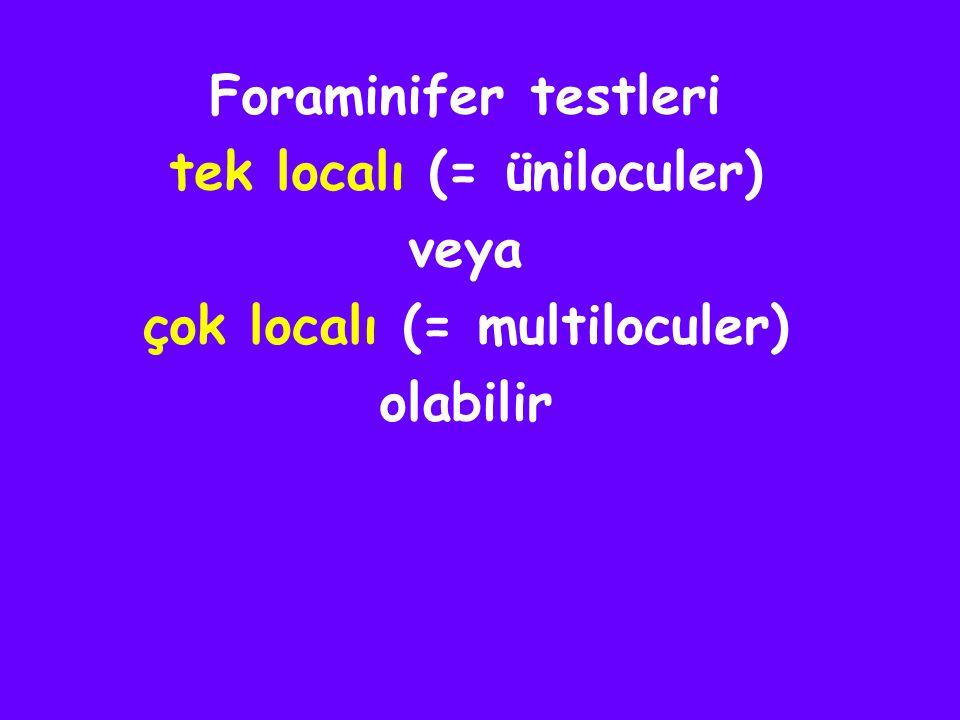 tek localı (= üniloculer) çok localı (= multiloculer)