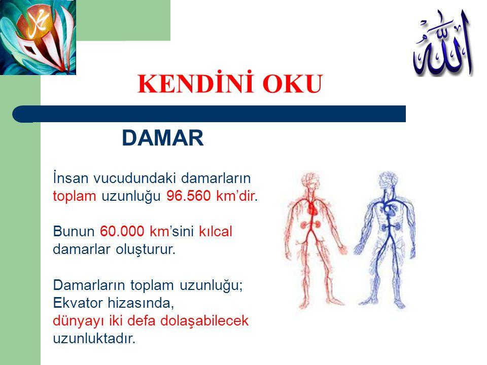 KENDİNİ OKU DAMAR İnsan vucudundaki damarların