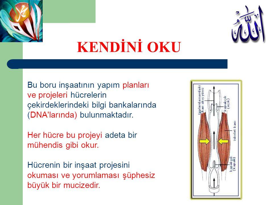 KENDİNİ OKU Bu boru inşaatının yapım planları ve projeleri hücrelerin