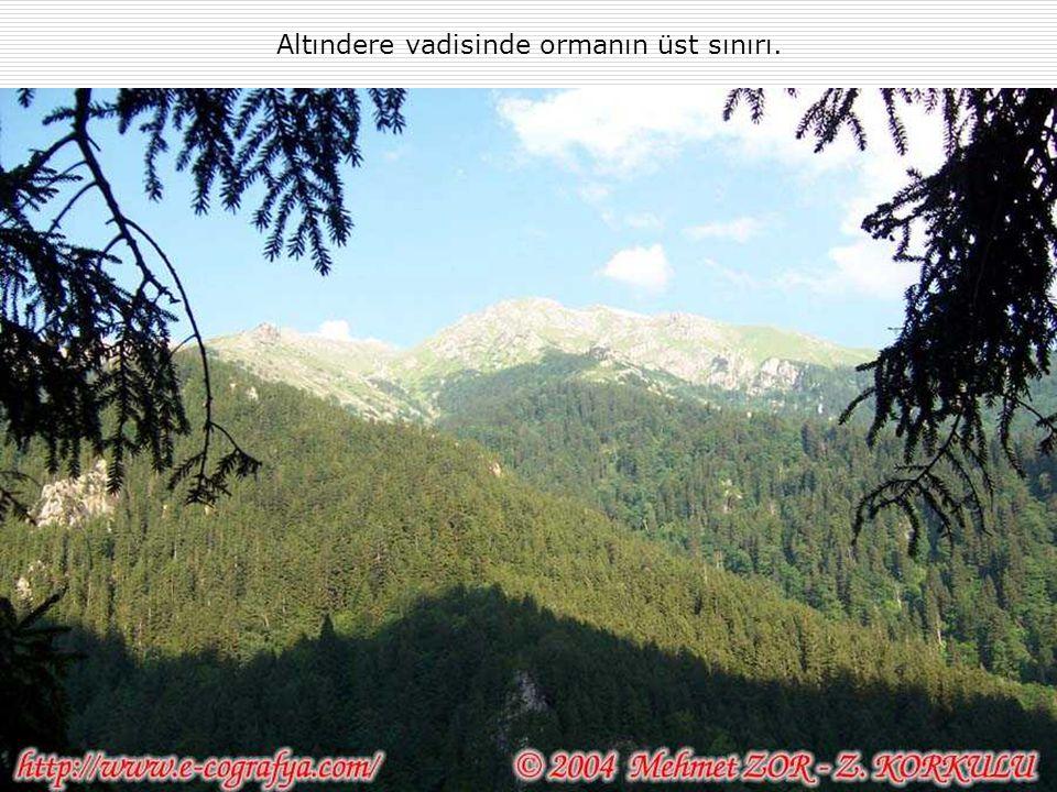 Altındere vadisinde ormanın üst sınırı.