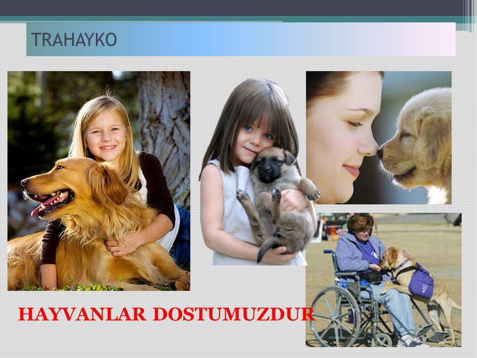 TRAHAYKO HAYVANLAR DOSTUMUZDUR