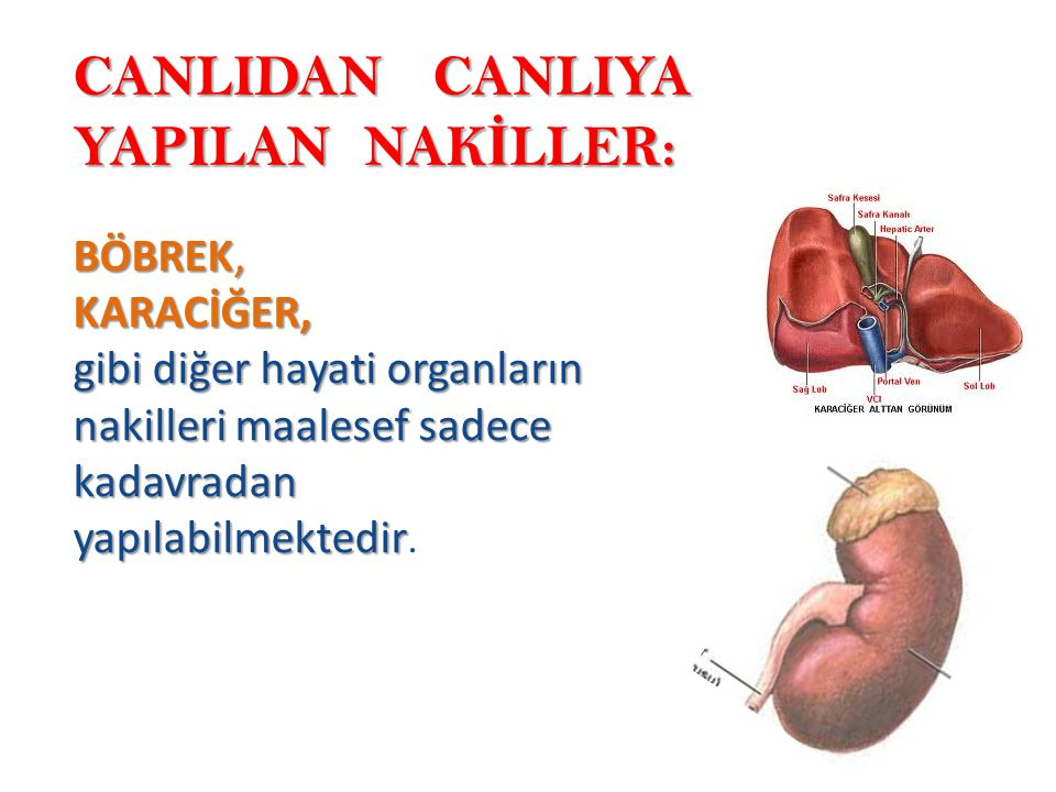 CANLIDAN CANLIYA YAPILAN NAKİLLER: