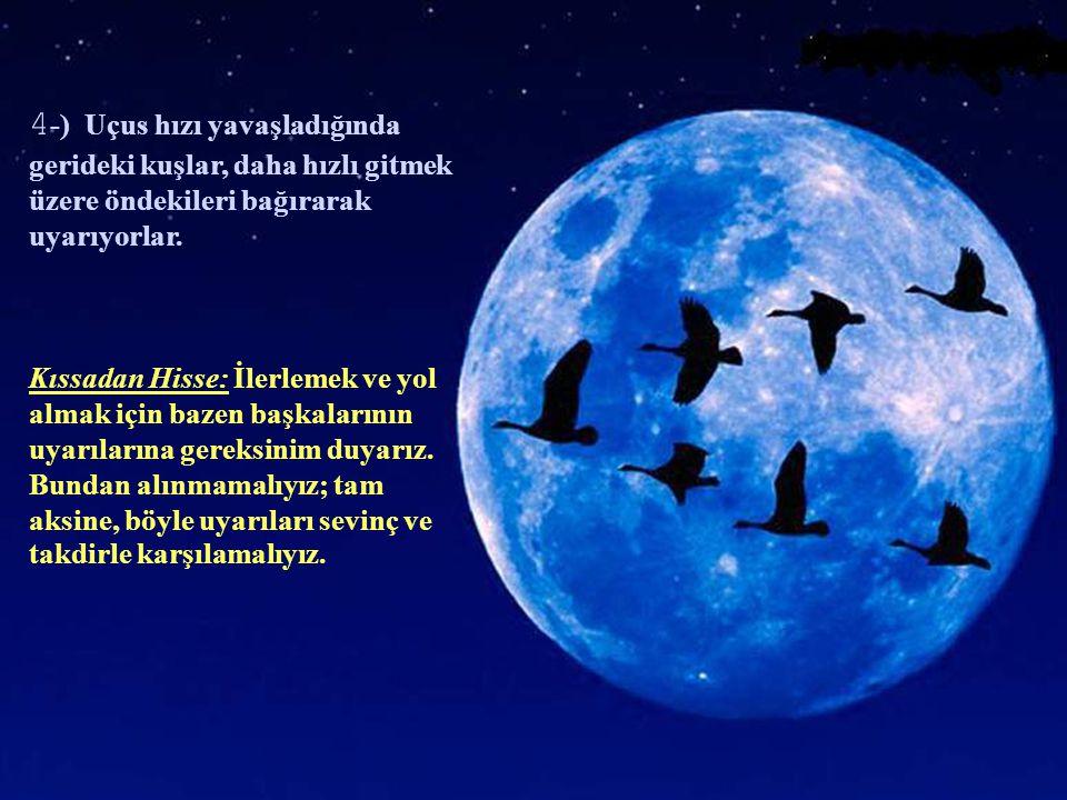 4-) Uçus hızı yavaşladığında gerideki kuşlar, daha hızlı gitmek üzere öndekileri bağırarak uyarıyorlar.