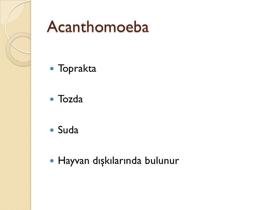 Acanthomoeba Toprakta Tozda Suda Hayvan dışkılarında bulunur