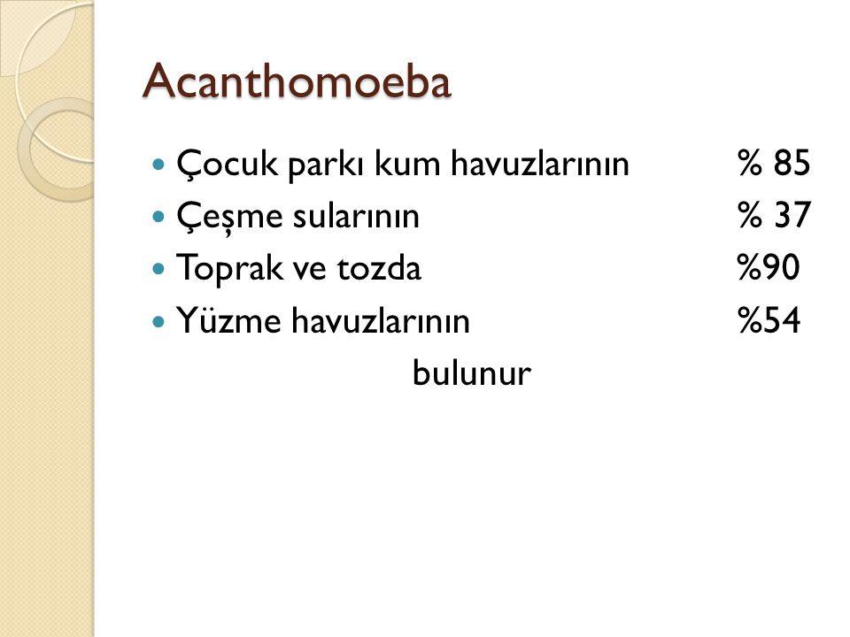 Acanthomoeba Çocuk parkı kum havuzlarının % 85 Çeşme sularının % 37