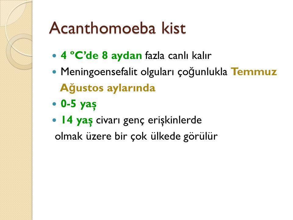 Acanthomoeba kist 4 ºC'de 8 aydan fazla canlı kalır