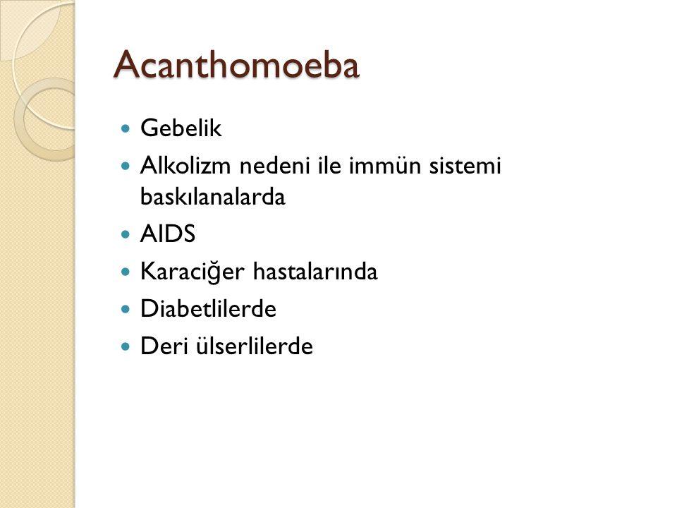 Acanthomoeba Gebelik Alkolizm nedeni ile immün sistemi baskılanalarda