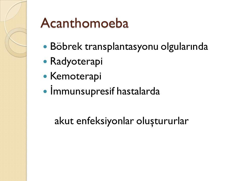 Acanthomoeba Böbrek transplantasyonu olgularında Radyoterapi