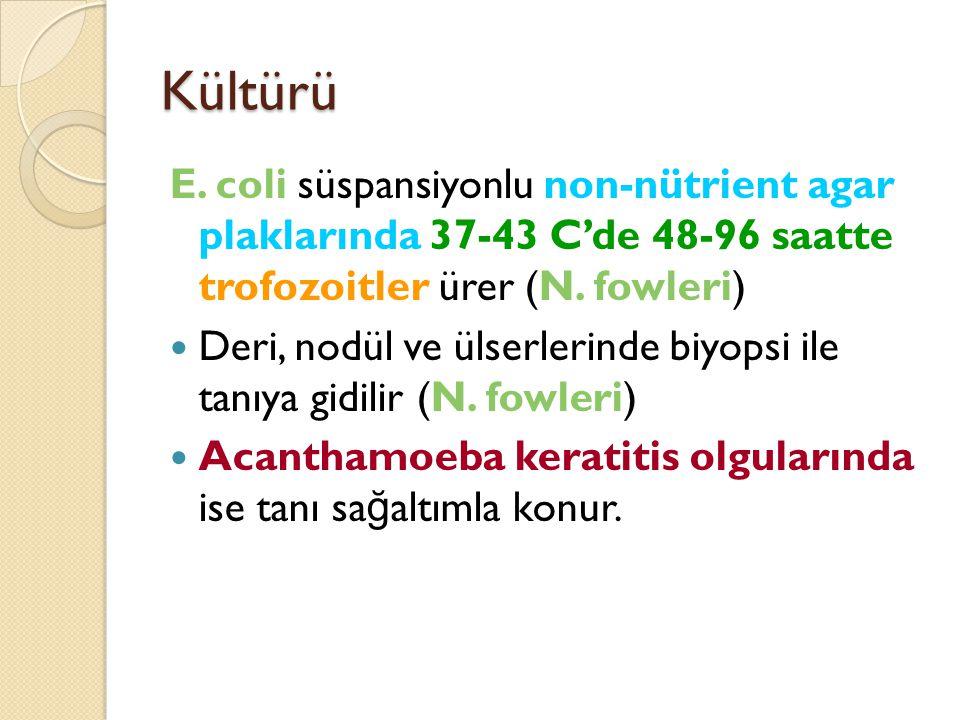 Kültürü E. coli süspansiyonlu non-nütrient agar plaklarında 37-43 C'de 48-96 saatte trofozoitler ürer (N. fowleri)