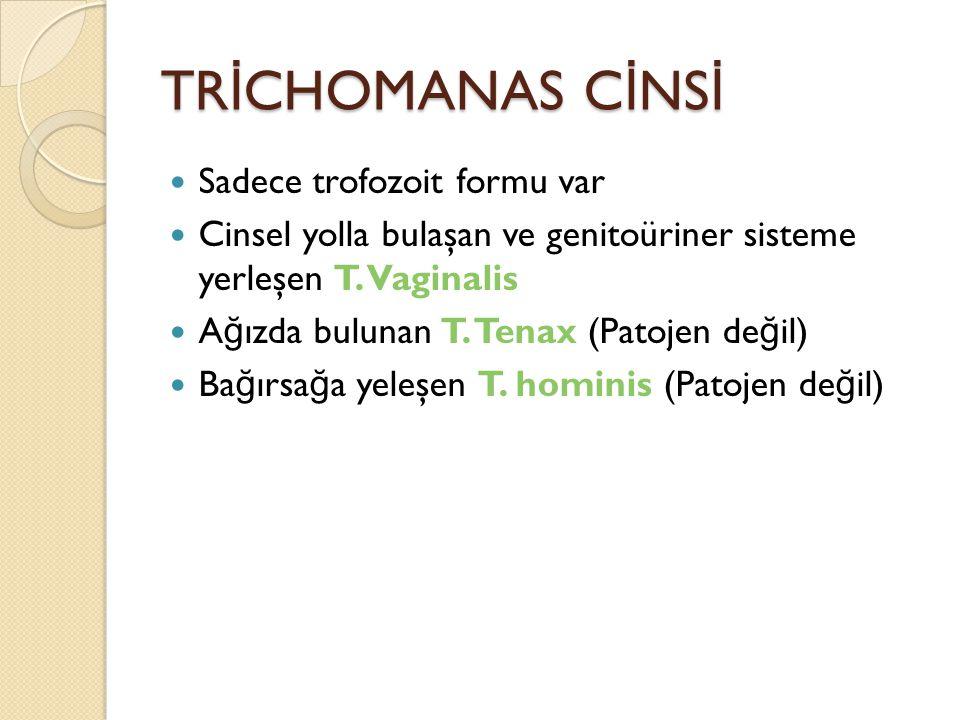 TRİCHOMANAS CİNSİ Sadece trofozoit formu var