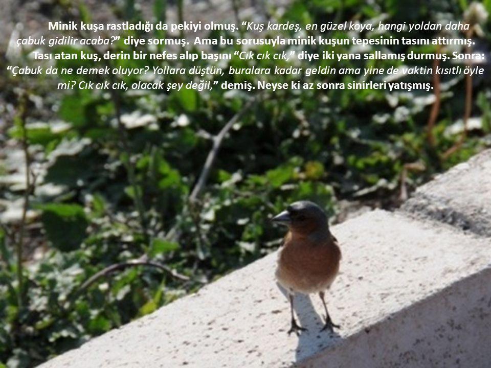 Minik kuşa rastladığı da pekiyi olmuş