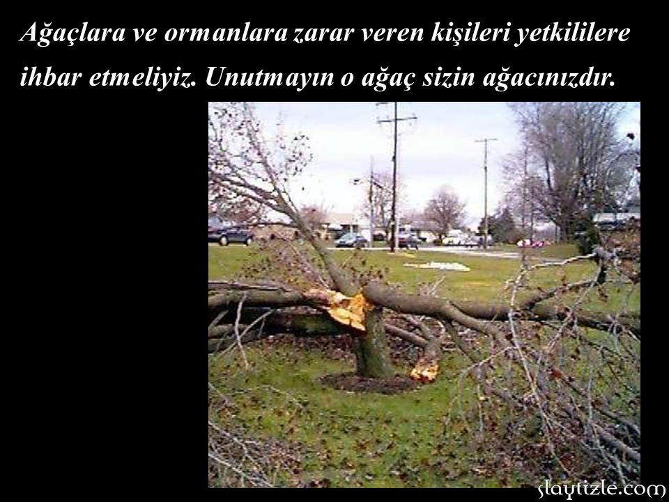 Ağaçlara ve ormanlara zarar veren kişileri yetkililere ihbar etmeliyiz