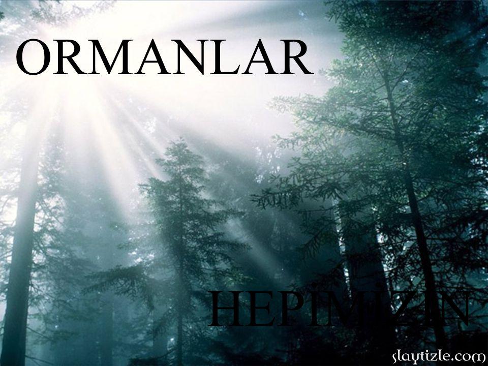 ORMANLAR HEPİMİZİN