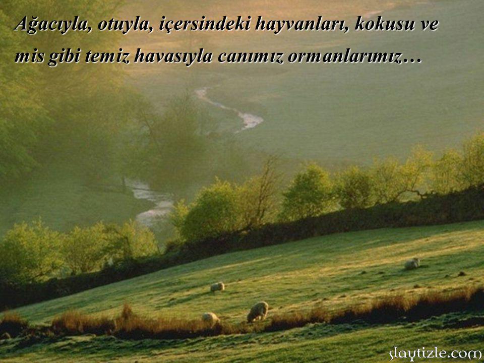 Ağacıyla, otuyla, içersindeki hayvanları, kokusu ve mis gibi temiz havasıyla canımız ormanlarımız…