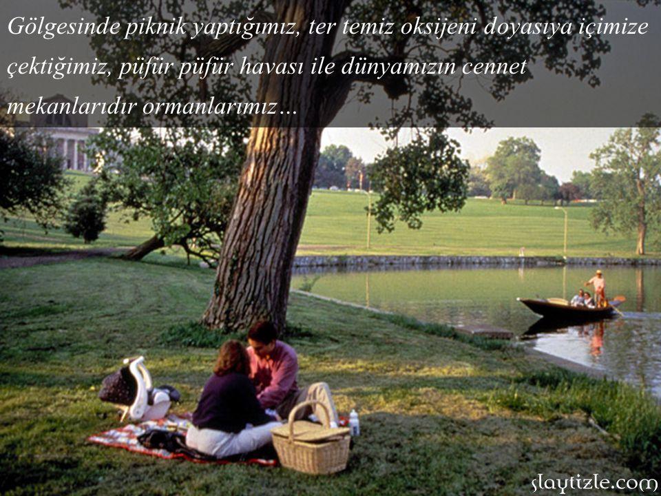Gölgesinde piknik yaptığımız, ter temiz oksijeni doyasıya içimize çektiğimiz, püfür püfür havası ile dünyamızın cennet mekanlarıdır ormanlarımız…