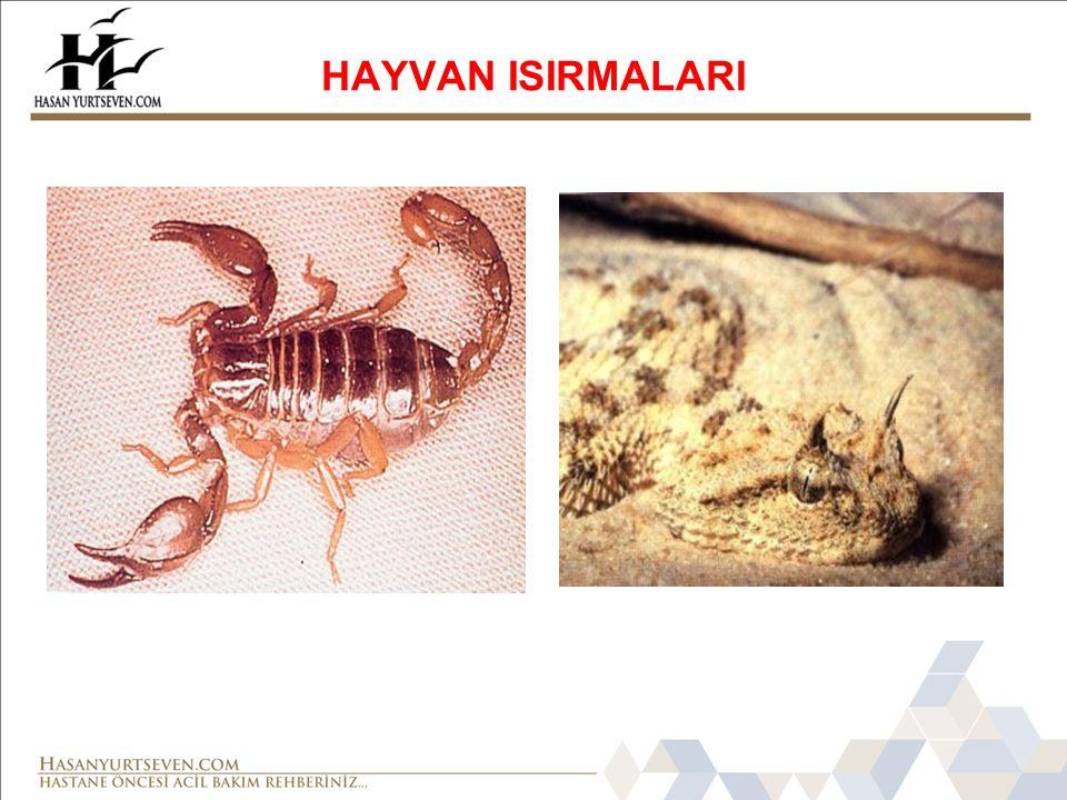 HAYVAN ISIRMALARI