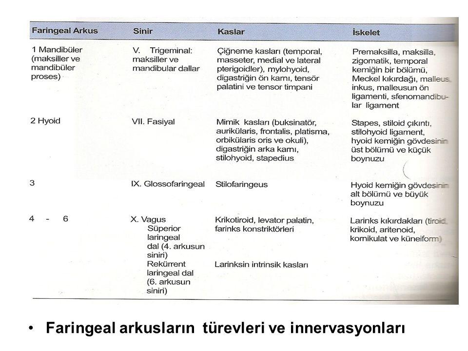 Faringeal arkusların türevleri ve innervasyonları