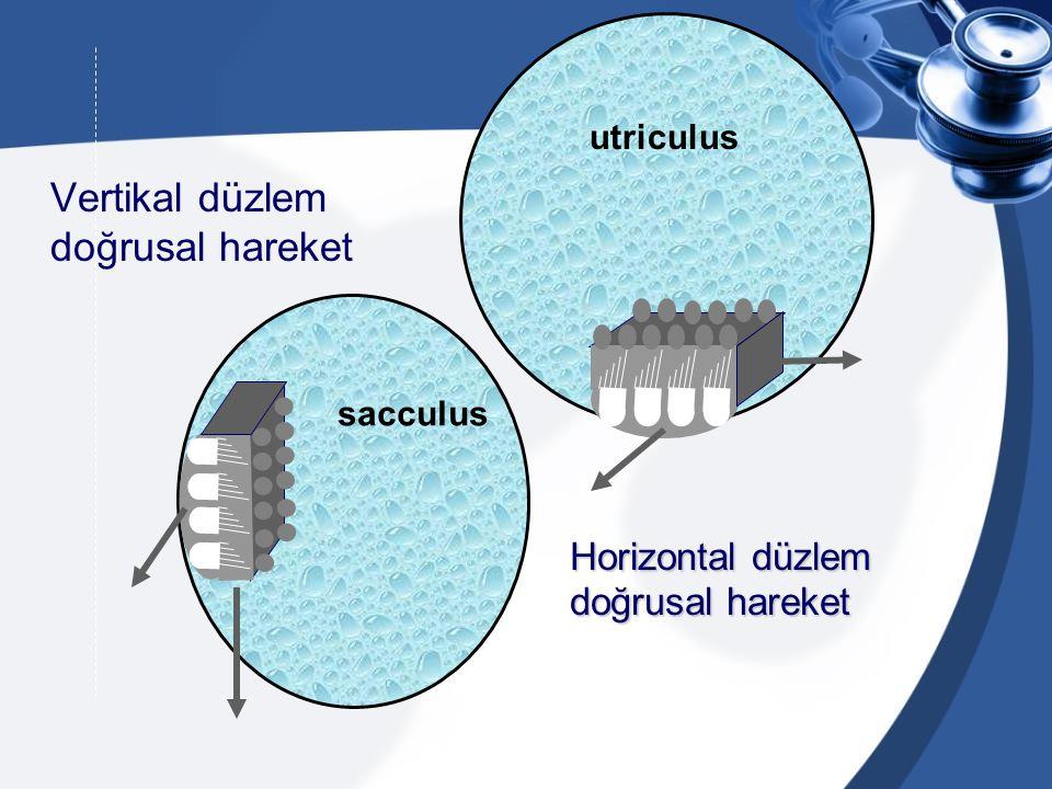 Vertikal düzlem doğrusal hareket