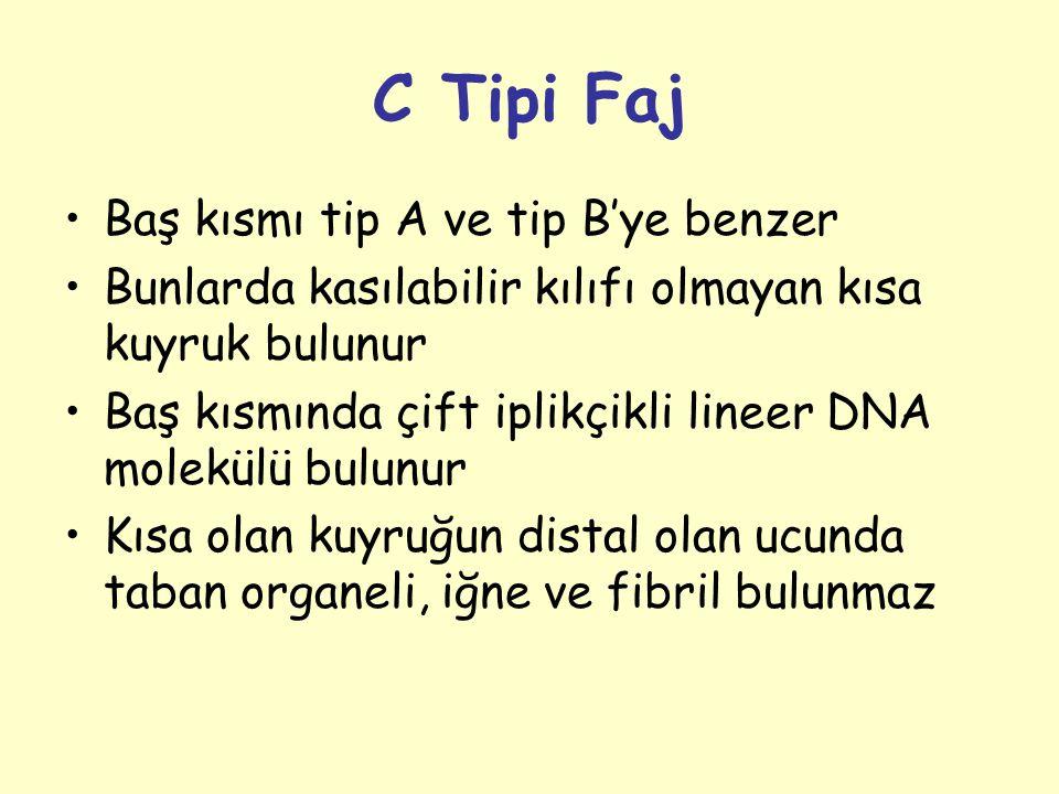 C Tipi Faj Baş kısmı tip A ve tip B'ye benzer
