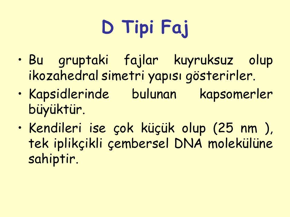 D Tipi Faj Bu gruptaki fajlar kuyruksuz olup ikozahedral simetri yapısı gösterirler. Kapsidlerinde bulunan kapsomerler büyüktür.