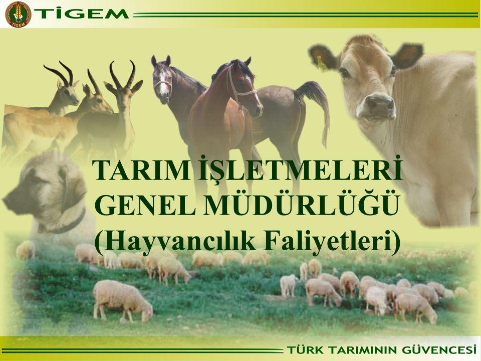TARIM İŞLETMELERİ GENEL MÜDÜRLÜĞÜ (Hayvancılık Faliyetleri)