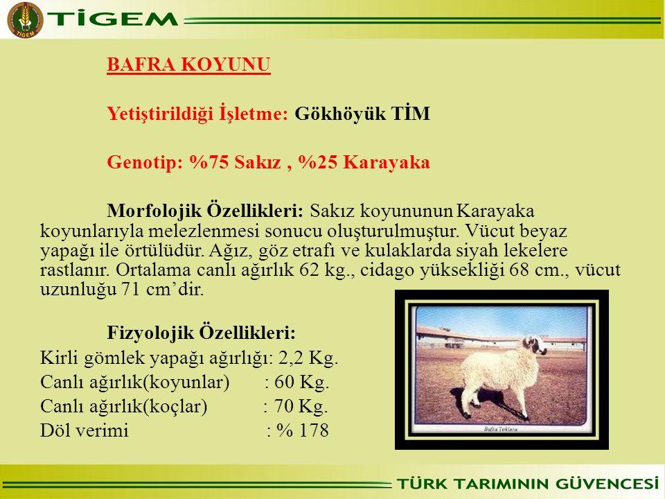 Yetiştirildiği İşletme: Gökhöyük TİM Genotip: %75 Sakız , %25 Karayaka