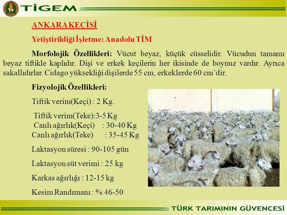 ANKARA KEÇİSİ Yetiştirildiği İşletme: Anadolu TİM.