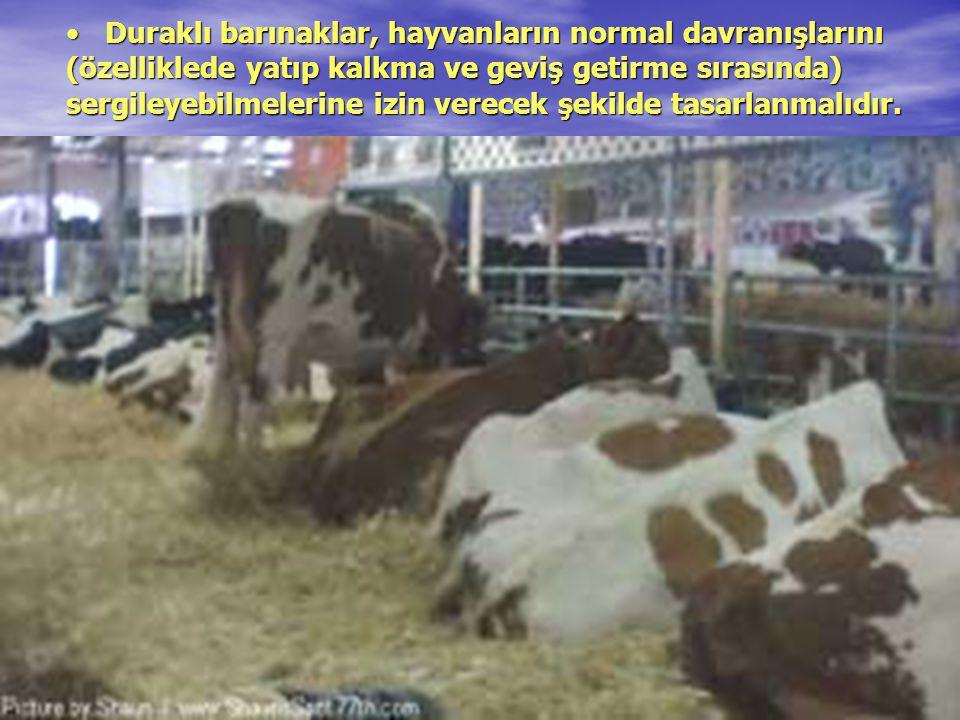 Duraklı barınaklar, hayvanların normal davranışlarını (özelliklede yatıp kalkma ve geviş getirme sırasında) sergileyebilmelerine izin verecek şekilde tasarlanmalıdır.