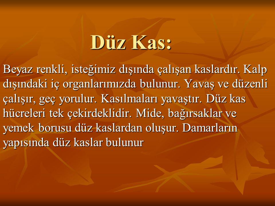 Düz Kas: